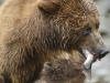 grizzly_20120715_5476