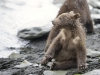 grizzly_20120715_5527