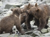 grizzly_20120715_5535