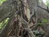 arbre_20101209_555_01