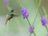 colibri_20101213_294_01
