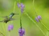 colibri_20101215_306_01