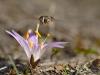 Flore et insectes d'Europe