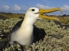 albatros_20080518_213