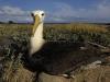 albatros_20080518_2151
