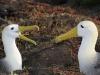 albatros_20080518_571