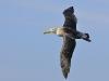 albatros_20080518_589