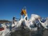 pelican_frise_041