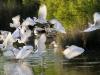 Oiseaux d'Europe