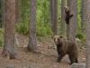 ours_petit_arbre2_01