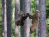 ours_petit_arbre4_01