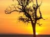 arbre_soleil_091008_00